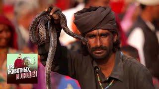 Индия. Часть 1 - Про животных и людей | Живая Планета