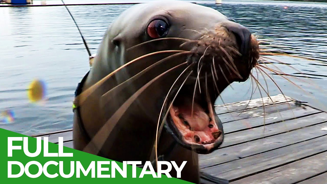 Lions of the Deep | Blue Realm | Free Documentary Nature