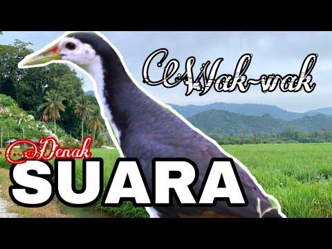 Download Suara Pemikat Wak-wak Power