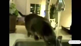 самые смешные кошки, лучшая подборка