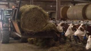 un soir a la ferme avec les vaches & les veaux 2016 en lorraine