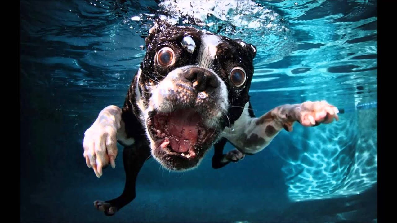 Underwater Dogs Drowning Pool Youtube