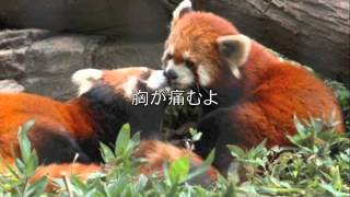 作詞作曲ボーカル 三浦京介.