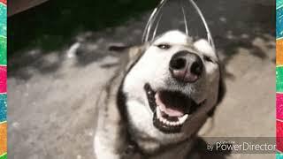 Топ 10 редких пород собак!
