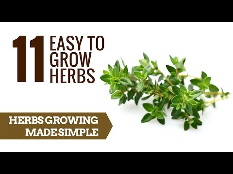 11 Easy to grow herbs | Herb Growing For Beginners