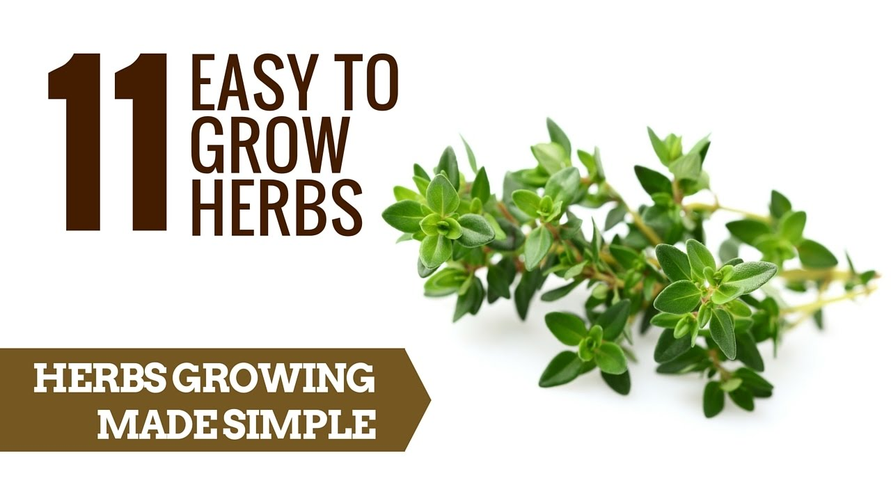 11 Easy To Grow Herbs Herb Growing For Beginners