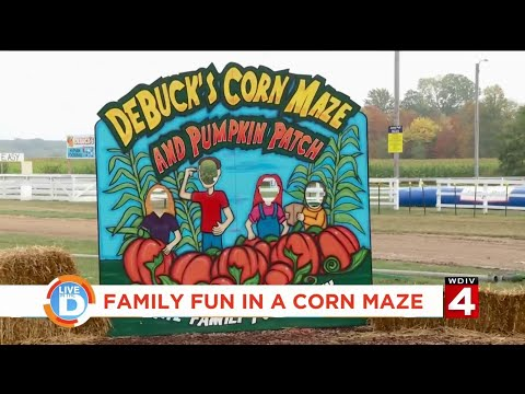 Live In The D: Family Fun In A Corn Maze