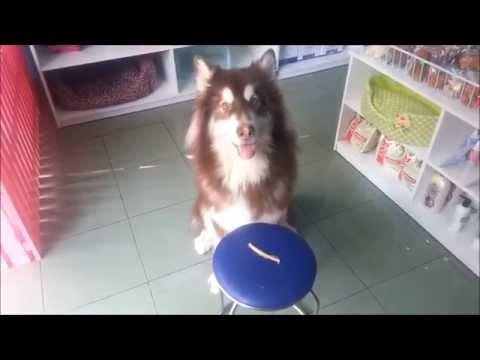 Dạy Cún Đi Vệ Sinh Đúng Nơi Quy Định - S&C Dog Shop