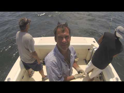 Striped Bass Charter Off Monomoy Island