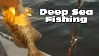 Deep Sea Fishing Clearwater Florida Grouper Sea Bass And Snapper