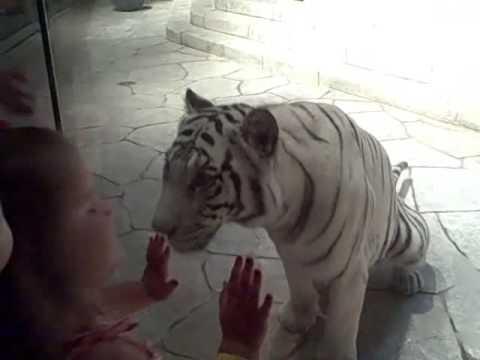 Houston Aquarium Texas White Tigers Shark Train