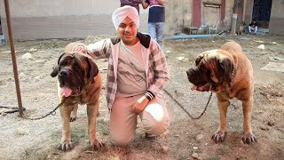 India's Most Expensive Dog Worth 4 Lakhs ! 😱