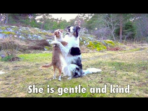 The most amazing dog tricks - SPLASH the border collie!