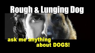 How to Get a ROTTWEILER to Stop LUNGING - ask me anything  - Dog Training Video