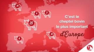#VGC - Le saviez-vous ? - Les races bovines