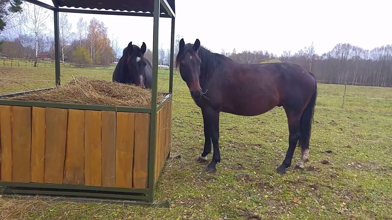 Diy Hay Feeder For Horses Youtube