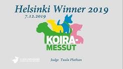 Helsinki Winner -19  ► Afghan Hounds