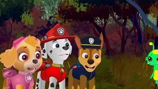 La Patrulla Canina - Videos capitulos completos dibujos animados para Niños, Español