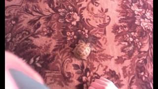 Прикол Черепаха Танцует