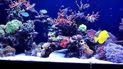 Das 720 Liter Meerwasser Aquarium von Melanie N.