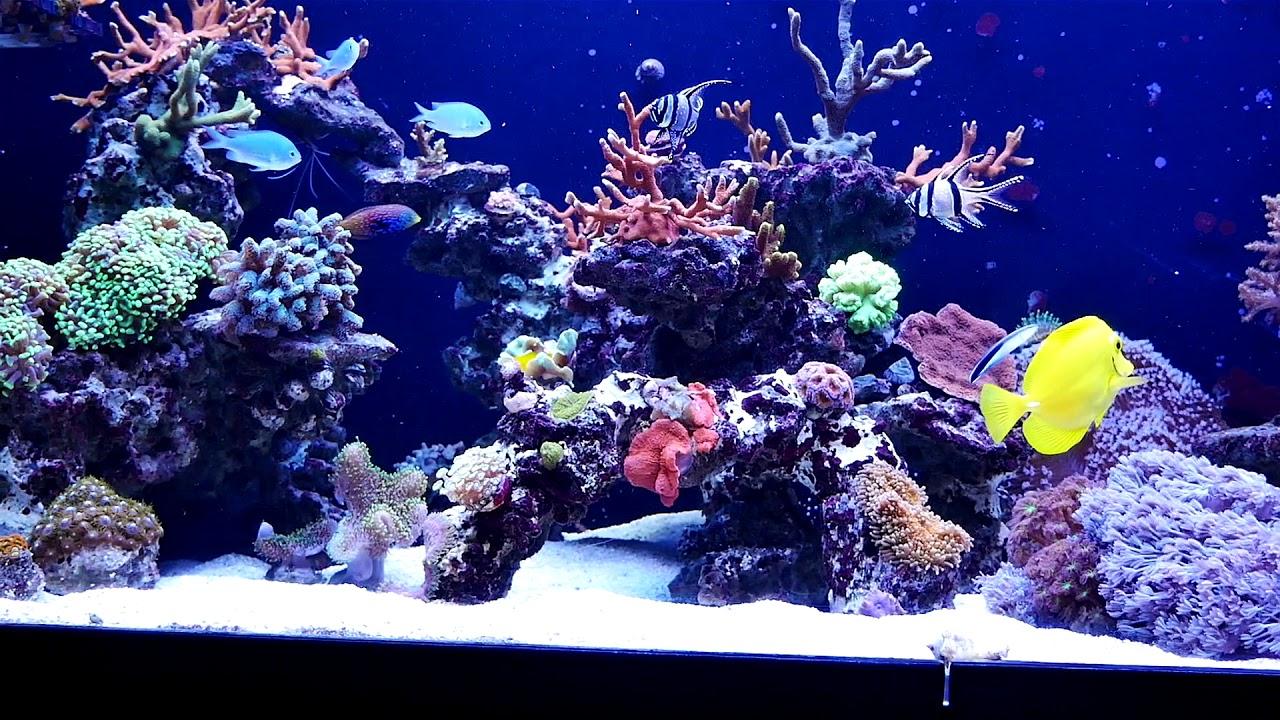 salzwasser aquarium einrichten einrichtungsbeispiele meerwasser aquarium meerwasser aquarium. Black Bedroom Furniture Sets. Home Design Ideas