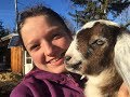 Baby Goats: From Labour and Birth to Super Cute Playful Goat Babies