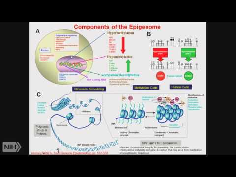 TRACO 2016: Epigenetics and Pancreatic cancer