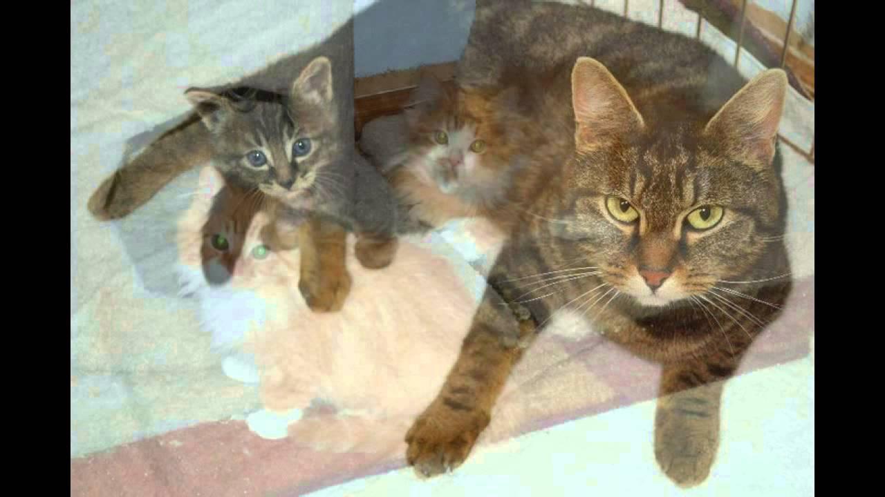 Celebrating Foster Dad John S 50th Litter Of Kittens Youtube