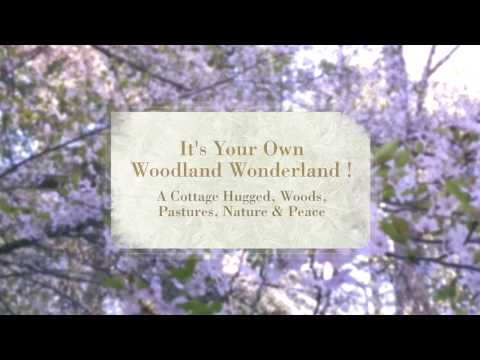 Welcome Home to Your Woodland Wonderland !