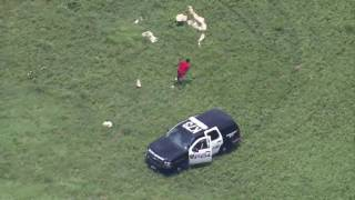 Pilot Jumps Out Of Helicopter, Tackles Fleeing Suspect Like An NFL  Linebacker