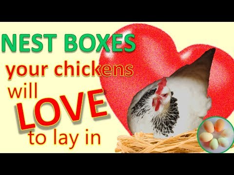 10 top tips for nest boxes your hens will love to lay in