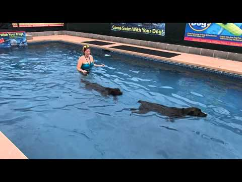 Boxer mix JoJo & Mix Breed Dog Mutt Miller swim with their mom in swimming pool