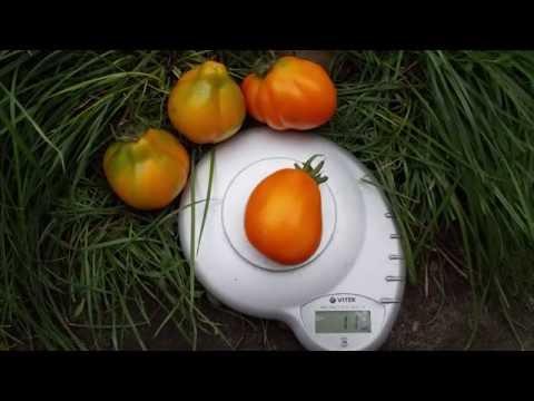 Сорт томата Трюфель желтый