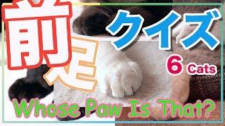 猫の前足クイズ  - 6 Cats Quiz-