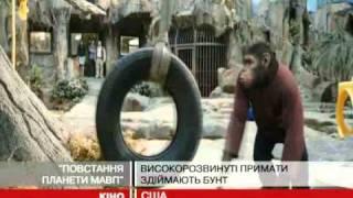 """""""Повстання планети мавп"""": високорозвинуті п..."""