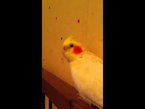 Птичка трясет головой