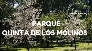 PARQUE QUINTA DE LOS MOLINOS - Conoce Madrid A mi Aire