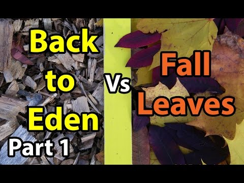 Back to Eden Organic Gardening 101 Method with Wood Chips VS Leaves Composting Garden Soil  #1
