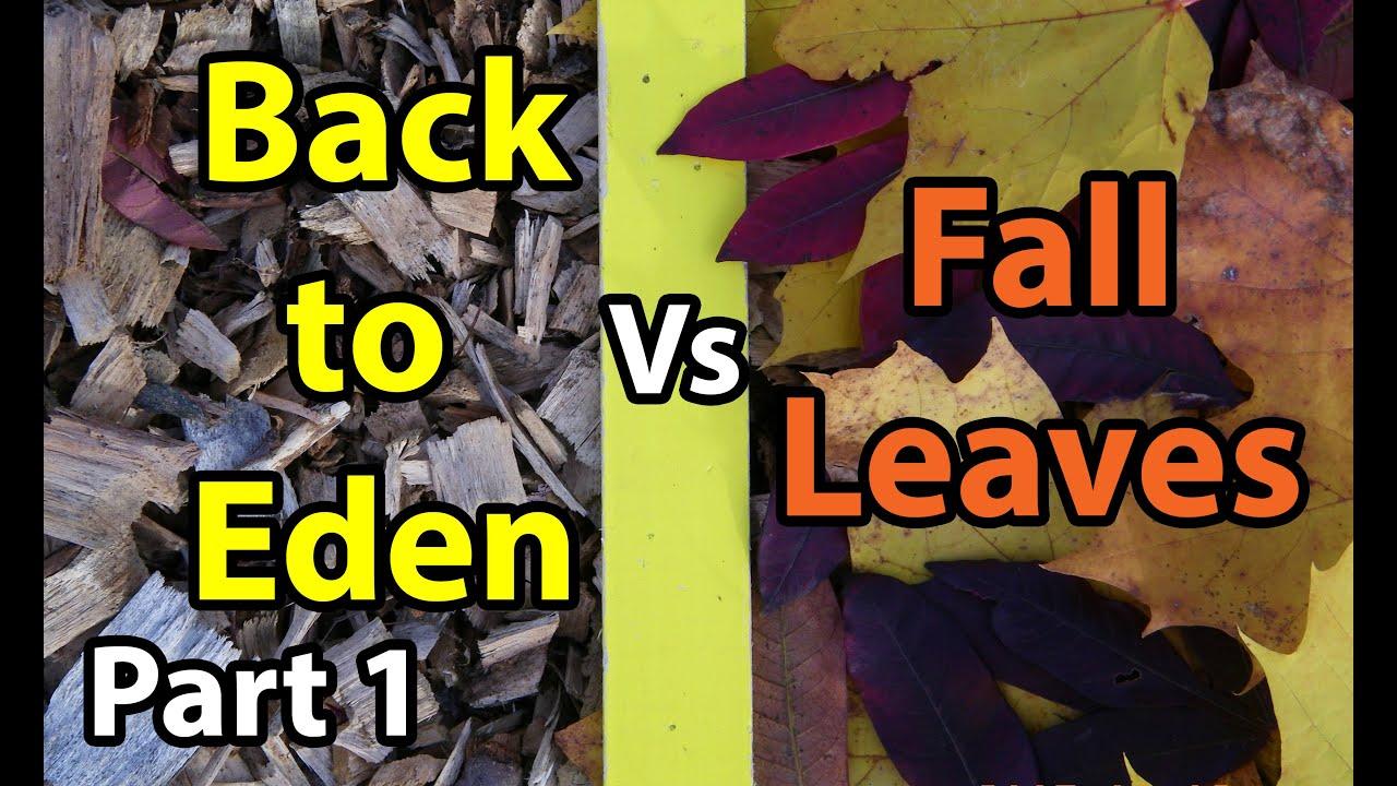 Back To Eden Organic Gardening 101 Method With Wood Chips Vs Leaves Composting Garden Soil 1