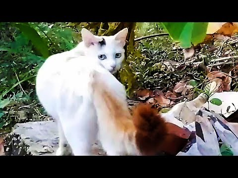 Mother cat calling kitten