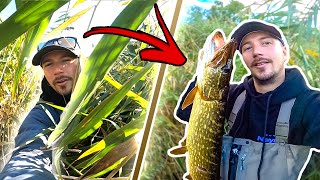 FISHING PIKE IN THICK REEDS FROM SHORE Insane Fishing in Small River Team Galant