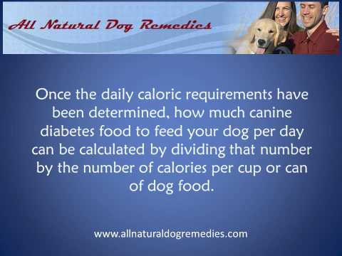 Dog Food For Dogs With Diabetes