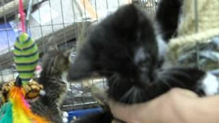 веселые котята в зоомагазине Динозаврик