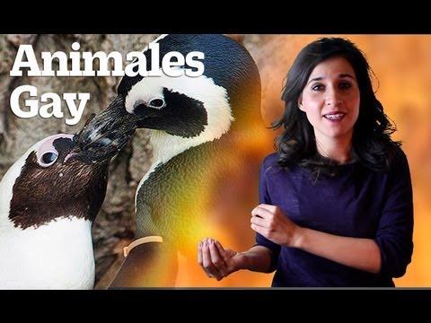 Homosexualidad En El Reino Animal. Cinco Animales Gay. Gay Animals