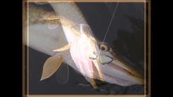 Sortie pêche carnassiers à la verticale, Torcy (71)