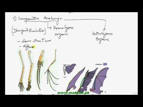 Fsc Biology Book2 Ch 24 Lec 5 Evidences Of Evolution Comparative
