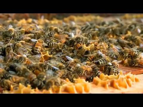 MSUToday: MSU Bee Team