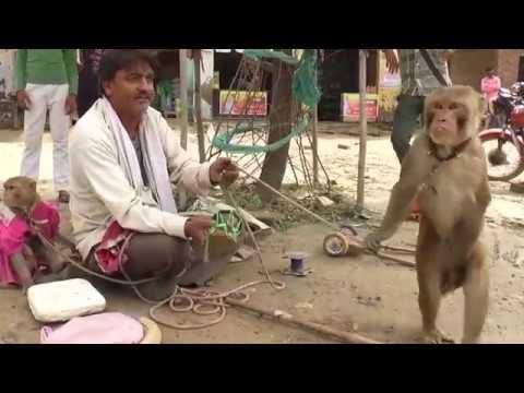 बंदर और बंदरिया का खेल  !! Bandar Aur Bandariya ka Khel
