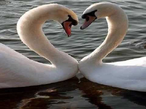 MY VALENTINE - Jim Brickman/Martina McBride (Lyrics)