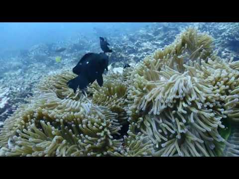 West Sumatra - Padang Dive 2016